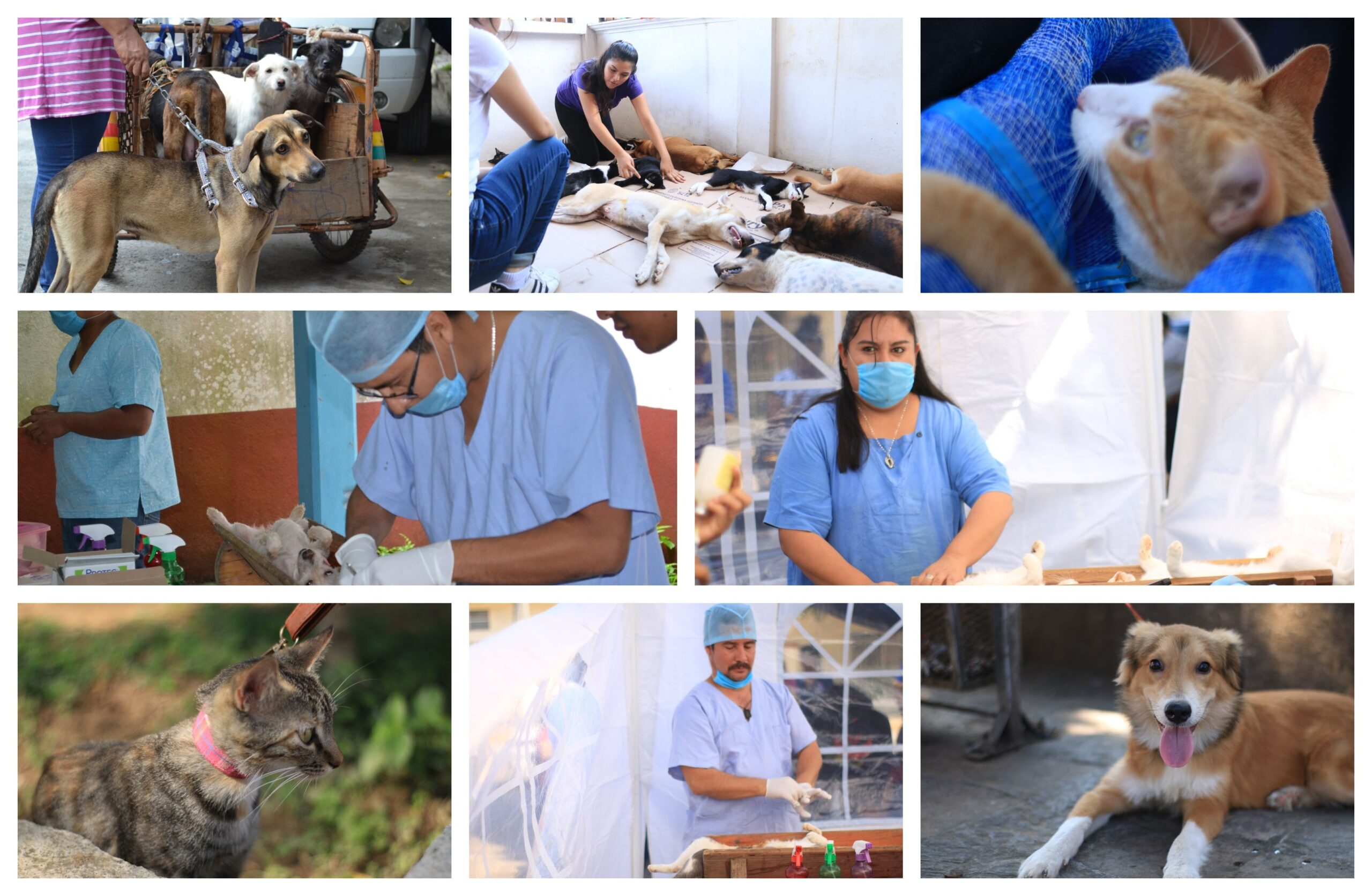 Alumnos del Bachillerato UMAD realizar?n una Campa?a gratuita de esterilizaci?n para mascotas